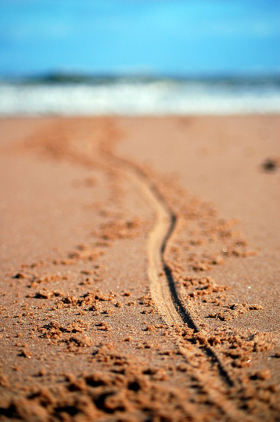 Line Drawing Beach : Draw a line in the sand manifested harmony