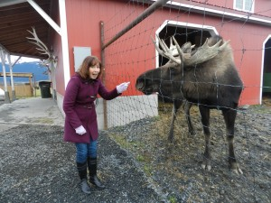 Offering Reiki to a moose in Alaska! Fabulous!