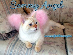 My Sammy is now one of my guardian angels.