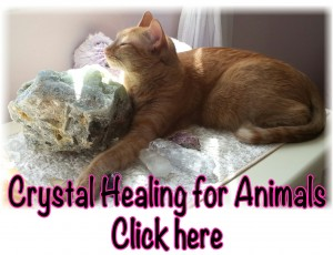 Crystal Healing for Animals photo