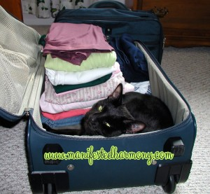 Lucy in suitcase